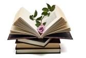 6238010-una-rosa-rosa-en-un-libro-abierto